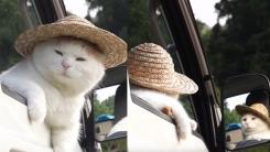 '사람 아니야?' 차 좀 타본 고양이의 흔한 자세