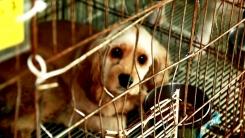 """충격적인 '강아지 공장'...정부 """"불법 번식장, 제대로 처벌"""""""