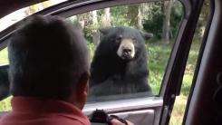 한 가족이 탄 자동차 문 앞발로 열어버린 곰