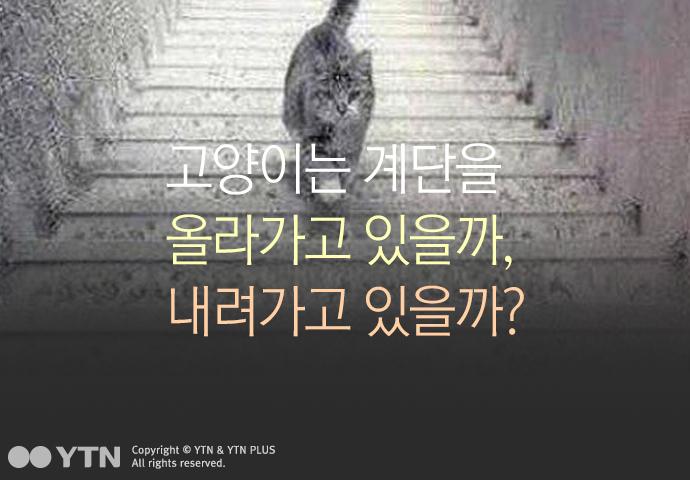 [한컷뉴스] 고양이는 계단을 올라가고 있을까?