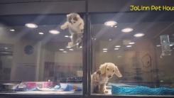 유리 벽 사이에서 생긴 '개와 고양이의 특별한 우정'