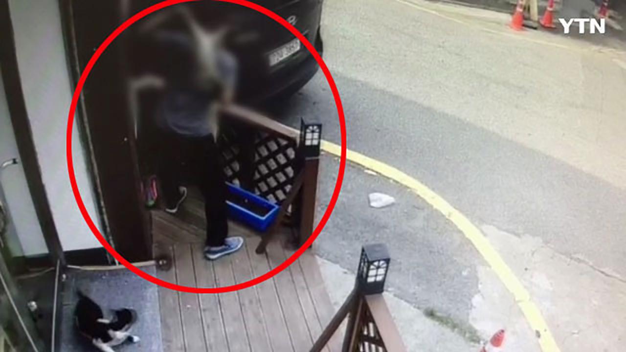[영상] 고양이 잔혹하게 내던지고는 '웃으며 도망쳤다'
