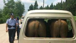 '창문에 엉덩이가...' 소 태우려고 차 불법 개조한 농부