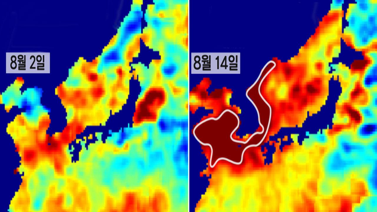 한반도 '뜨거운 바다' 위성 관측...피해 눈덩이