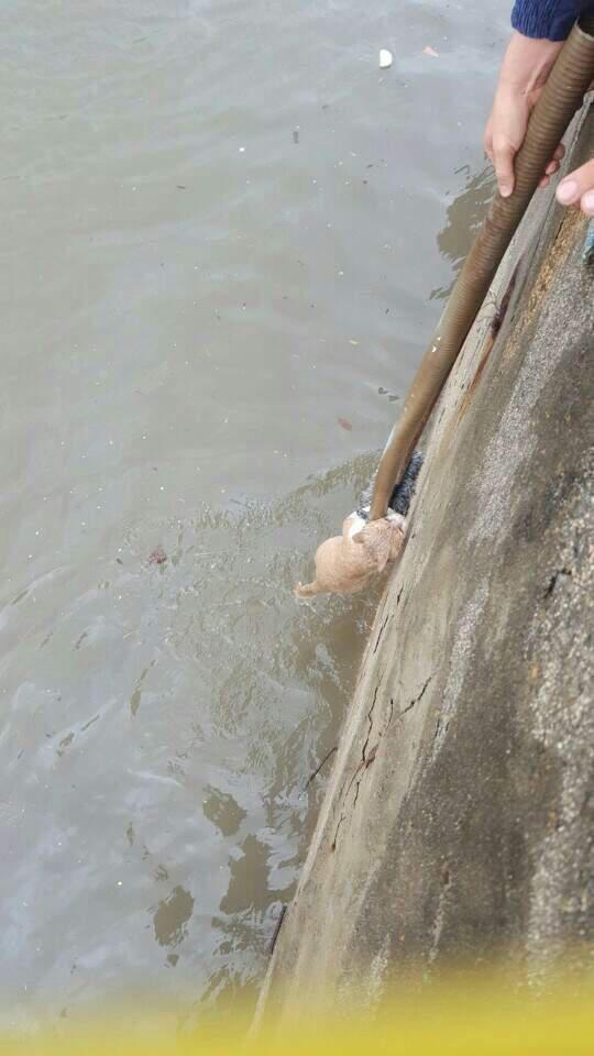 부산에서 떠내려가는 길고양이 구해준 사람들