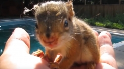 이 다람쥐는 사람이 엄마인 줄 안다