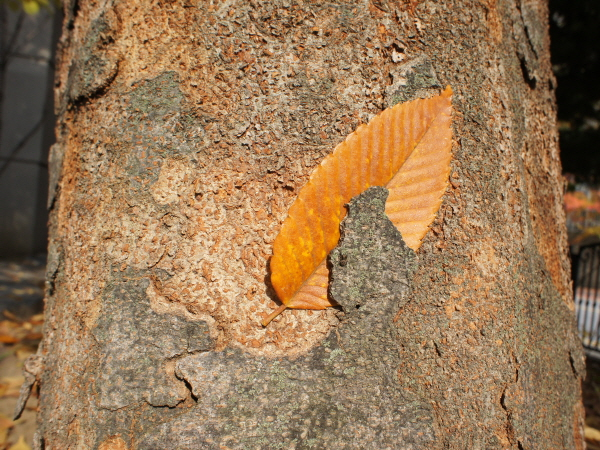 [포토에세이-남양주] 센스쟁이 가을