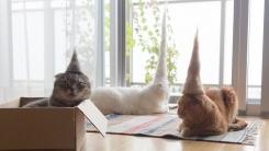 고양이들에게 특별한 모자를 만들어 주었다