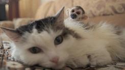 이 고양이는 원숭이를 입양해 키우고 있다
