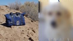사막에 버려진 가방 속에서 '살아있는 개' 발견돼