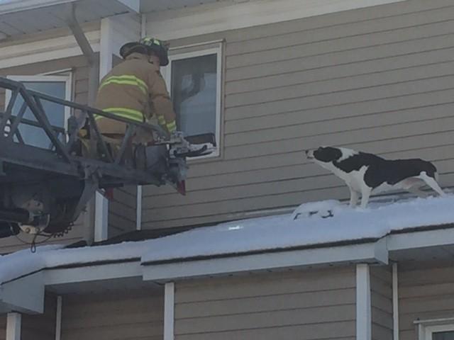 지붕 위로 올라갔다가 신고당한 개