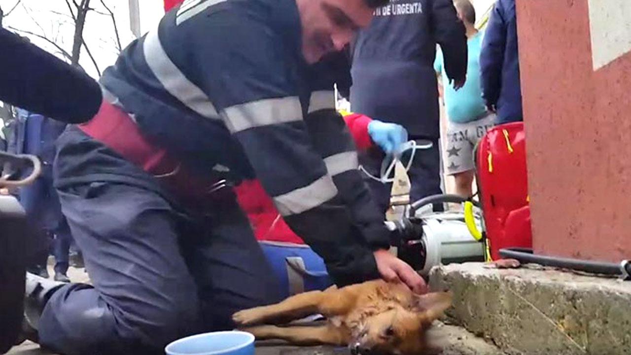 화재로 의식 잃은 개에게 심폐소생술 한 소방관