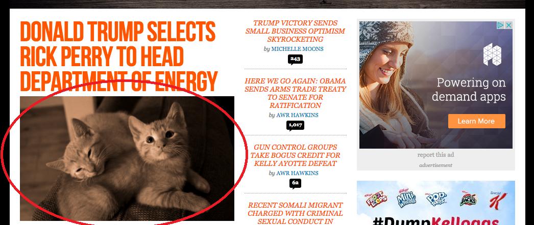 도널드 트럼프의 얼굴을 고양이로 만드는 기적?