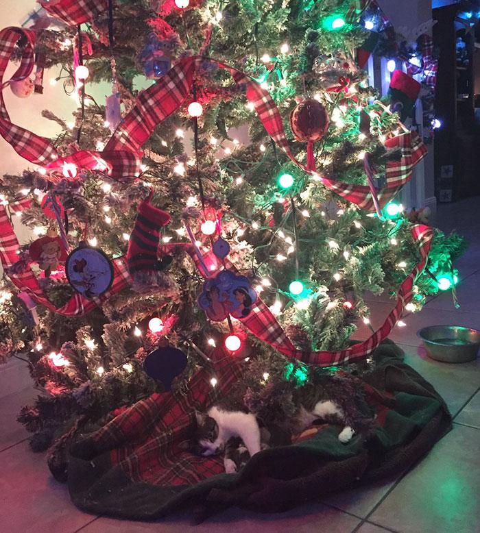'최고의 크리스마스 선물' 트리 아래 새끼 낳은 고양이