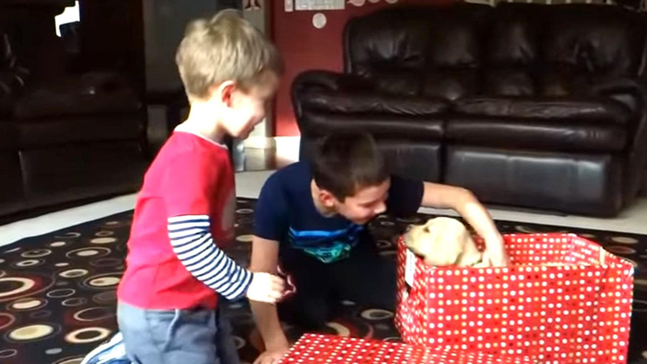 크리스마스 깜짝 선물로 강아지를 받은 사람들 반응