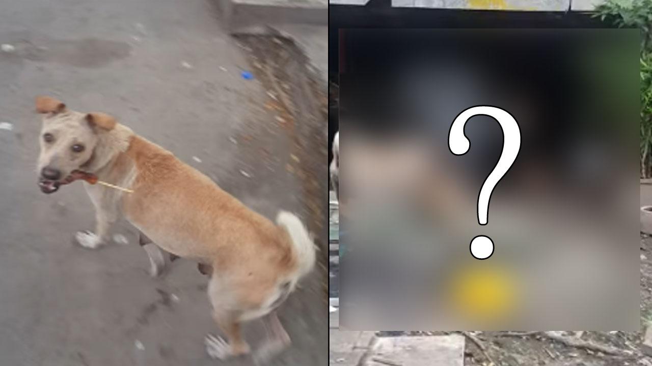 떠돌이 개가 자신이 받은 고기를 먹지 않은 이유