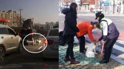 [좋은뉴스] 도로 위로 뛰어든 강아지 살린 시민들