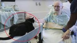 병원 누비는 이 고양이의 정체는?