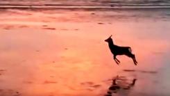 퇴근길 우리의 모습과 닮은 '사슴' 한 마리