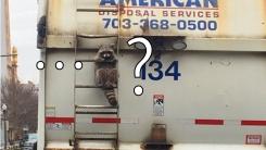 도로 위 쓰레기 수거 트럭에 라쿤이 매달려 있었던 이유