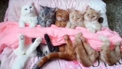 이불 덮어주는거냥? 세상 얌전한 고양이들