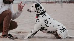 귀가 안 들리는 강아지가 세상과 소통하는 방법