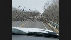 새 떼를 차로 치고 지나간 운전자 비난 봇물