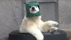 북극곰이 얼음보다 좋아하는 양동이