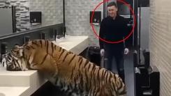 화장실에서 호랑이와 마주한 남자의 운명