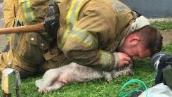 의식 잃은 강아지 인공호흡으로 살린 소방관