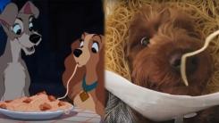 디즈니가 현실로? 파스타 먹는 강아지