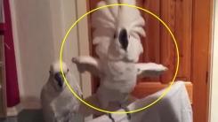 진정한 록을 보여주는 앵무새의 몸짓