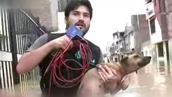 [영상] '방송보다는 구조가 먼저'...강아지 구한 리포터