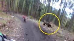 '위험천만' 자전거 타는 사람 쫓아가는 야생곰 포착