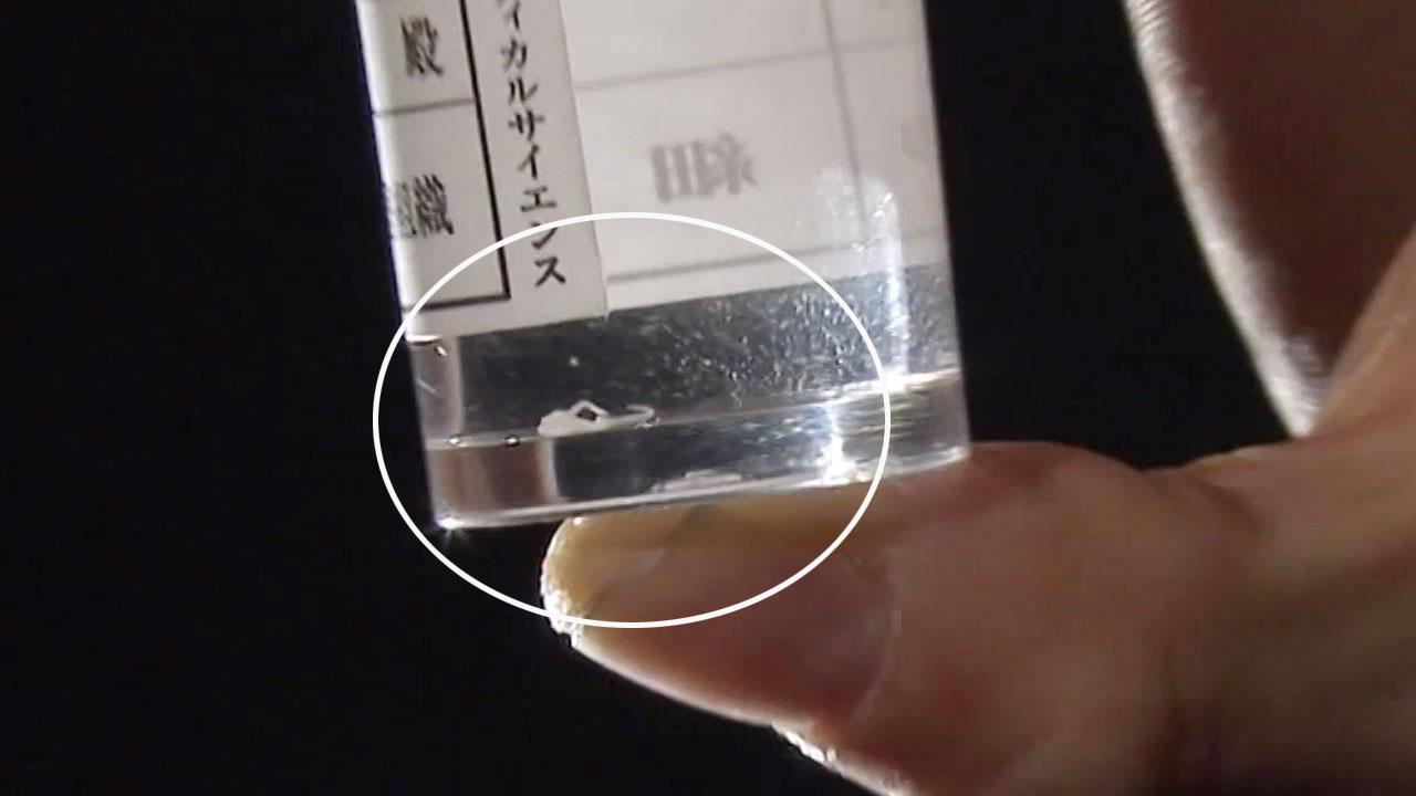 '생선회 나라' 日, 잇단 기생충 식중독에 패닉