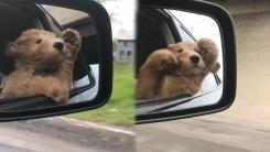 생애 첫 드라이브에 신난 아기 강아지