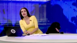 [지구촌 생생영상] 뉴스 진행 중 스튜디오 난입 대형견