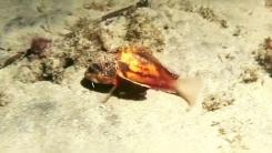 [영상] 모래 위를 '뚜벅뚜벅'...이상한 물고기 발견
