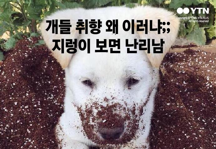 [한컷뉴스] 개가 지렁이 사체에서 몸을 굴리는 이유