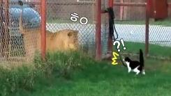 '뒤뜰에서 사자 만난 고양이'가 보인 뜻밖의 반응
