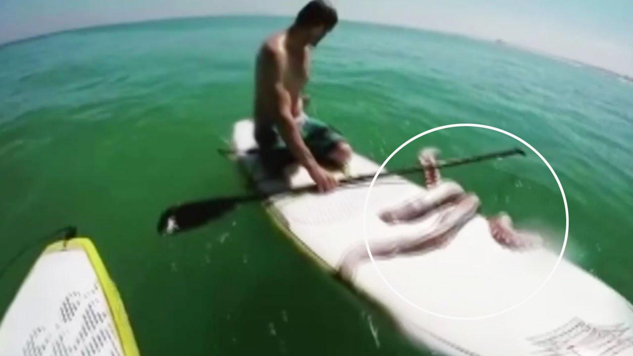[지구촌생생영상] '살려주세요'...대왕오징어의 구조요청