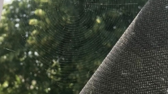 '방충망 대신 거미줄' 선택한 남성