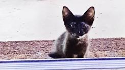 """""""저를 키워주세요"""" 문 앞에서 기다리던 고양이의 최후"""