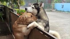 강아지들이 담장 사이에 두고 애틋하게 껴안은 사연
