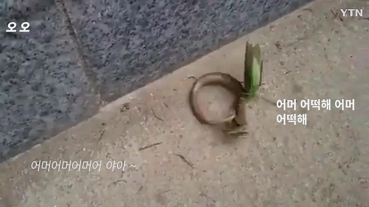 [영상] 뱀 vs. 사마귀...누가 이길까?