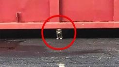 쓰레기통에 버려진 형제들 구해달라 요청한 새끼 고양이