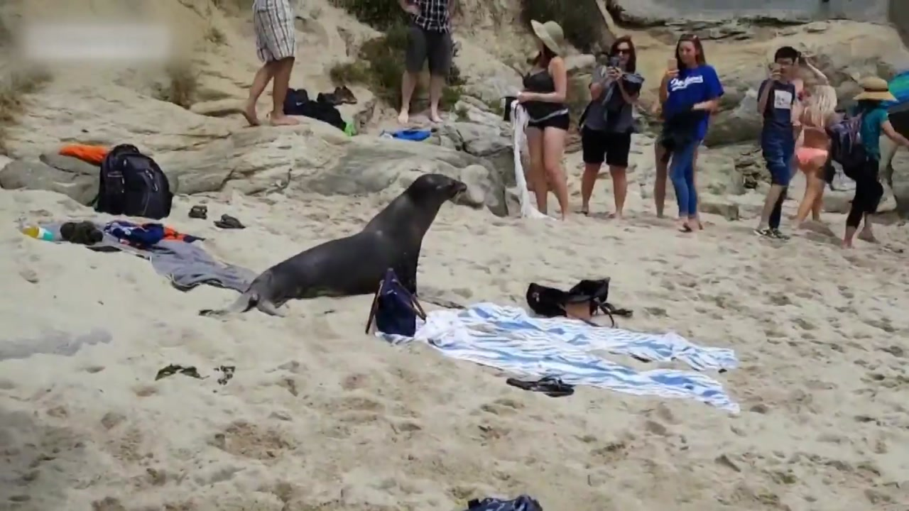 """[지구촌 생생영상] """"먹을 것 없나요?""""...굶주린 바다사자의 습격"""