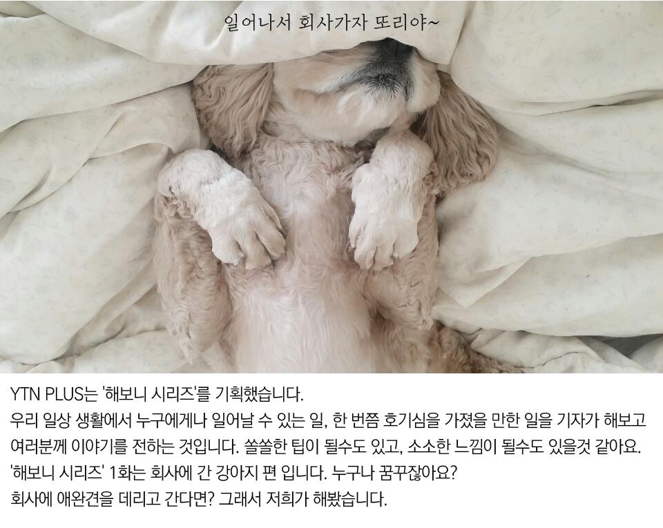 [해보니 시리즈 ①] 회사에 간 강아지