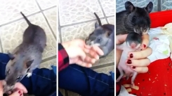 생쥐가 '사람 손'을 억지로 끌어당겨 데려간 이유