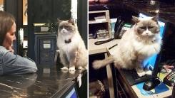 7년 동안 하루도 안 쉬고 호텔 출근한 고양이 사연